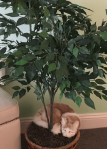 CatunderTree
