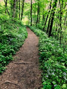 Path thru woods